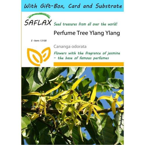 Saflax Gift Set - Perfume Tree Ylang Ylang - Cananga Odorata - 10 Seeds - with Gift Box, Card, Label and Potting Substrate