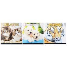 2018 Cats & Kittens Dogs & Puppies Wild Animals Square Wall Calendar Cute Pets Puppy Creatures Lions Tigers Bears Elephants Apes Christmas Birthday Gift Home Office