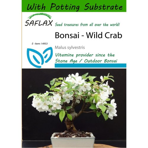 Saflax  - Bonsai - Wild Crab - Malus Sylvestris - 30 Seeds - with Potting Substrate for Better Cultivation