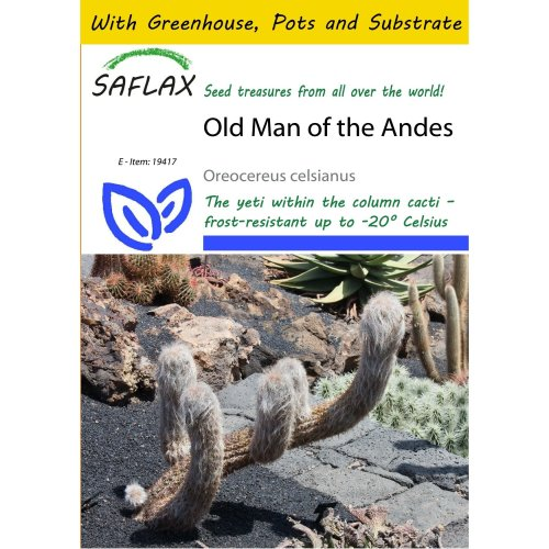 Saflax Potting Set - Old Man of the Andes - Oreocereus Celsianus - 40 Seeds - with Mini Greenhouse, Potting Substrate and 2 Pots