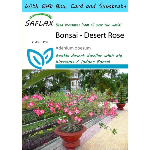Saflax Gift Set - Bonsai - Desert Rose - Adenium Obesum - 8 Seeds - with Gift Box, Card, Label and Potting Substrate