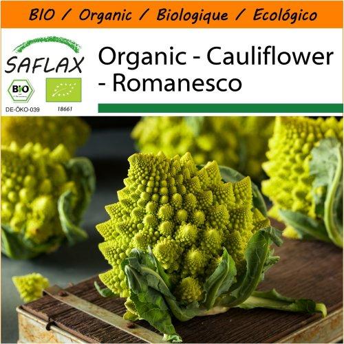 SAFLAX Garden in the Bag - Organic - Cauliflower - Romanesco - 50 certified organic seeds  - Brassica