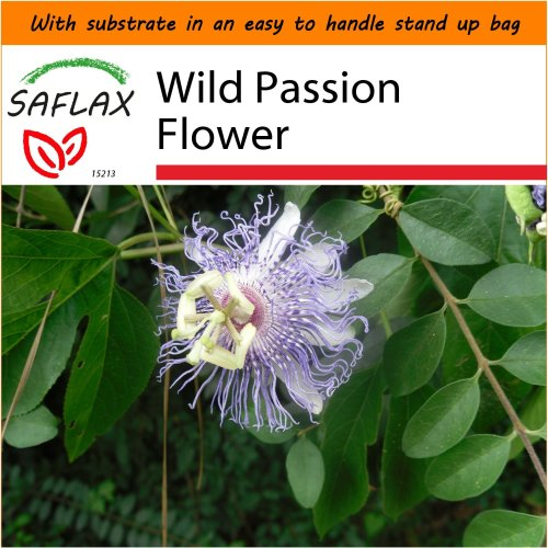 SAFLAX Garden in the Bag - Wild Passion Flower - Passiflora - 5 seeds