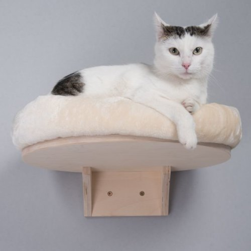 Wall Mounted Cat Bed with Plush Round Cushion