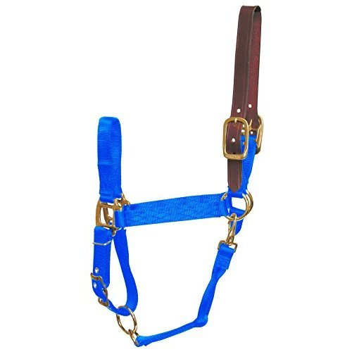 Hamilton 1-Inch Nylon Adjustable Horse Halter with Leather Head Poll and Throat Snap, Average, Blue