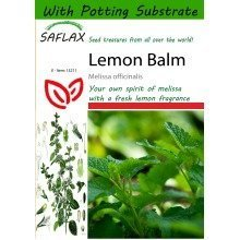 Saflax  - Lemon Balm - Melissa Officinalis - 150 Seeds - with Potting Substrate for Better Cultivation