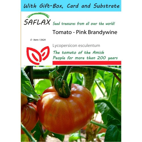 Saflax Gift Set - Tomato - Pink Brandywine - Lycopersicon Esculentum - 10 Seeds - with Gift Box, Card, Label and Potting Substrate