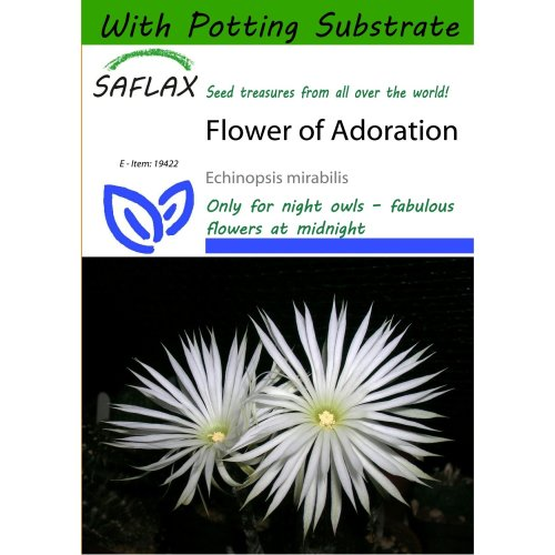 Saflax  - Flower of Adoration - Echinopsis Mirabilis - 40 Seeds - with Potting Substrate for Better Cultivation