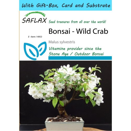 Saflax Gift Set - Bonsai - Wild Crab - Malus Sylvestris - 30 Seeds - with Gift Box, Card, Label and Potting Substrate
